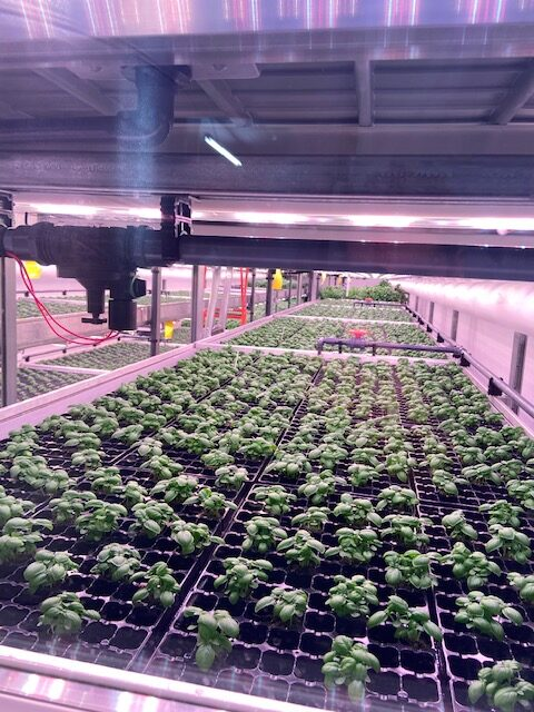 FMCG Consultants - Vertical Farming